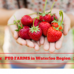 Picking your own produce is a favorite family event for people living in Waterloo Ontario