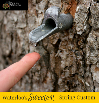 Maple Syrup: Symbol of Spring in Waterloo, Ontario