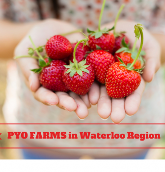 Living in Waterloo Ontario: PYO Farms