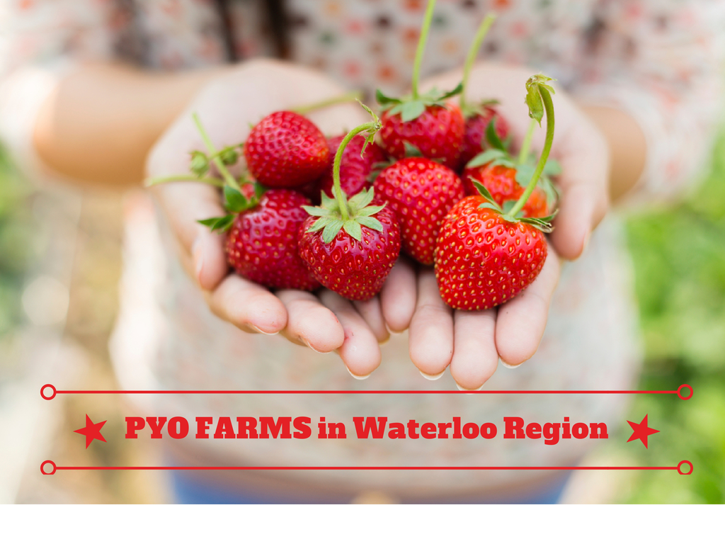 Living in Waterloo Ontario: PYO Farms